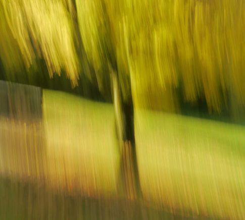 herbstbaum gaisalp