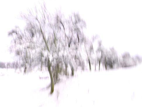 baumgruppe im schnee